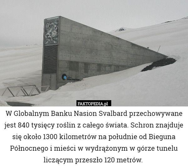 W Globalnym Banku Nasion Svalbard przechowywane jest 840 tysięcy roślin