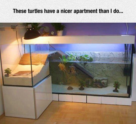 Ultimate turtle aquarium.