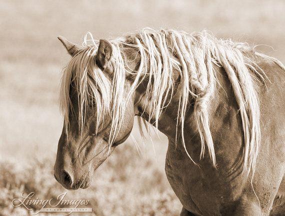 Wilde manen II  Fine Art Wild paard foto  Wild paard  Sepia