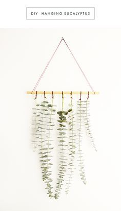 Loving this DIY hanging eucalyptus! (via Oh the Sweet Things)