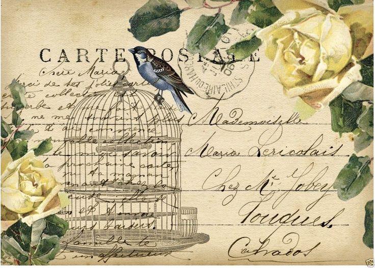 Briefe Mit Häftlingen : Die besten bilder zu vögel auf pinterest postkarten