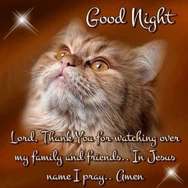 Goodnight Thank You Lord For Watching Over My Family goodnight good night goodnight quotes good evening good evening quotes goodnight quote goodnite goodnight quotes for friends goodnight quotes for family god bless goodnight quotes
