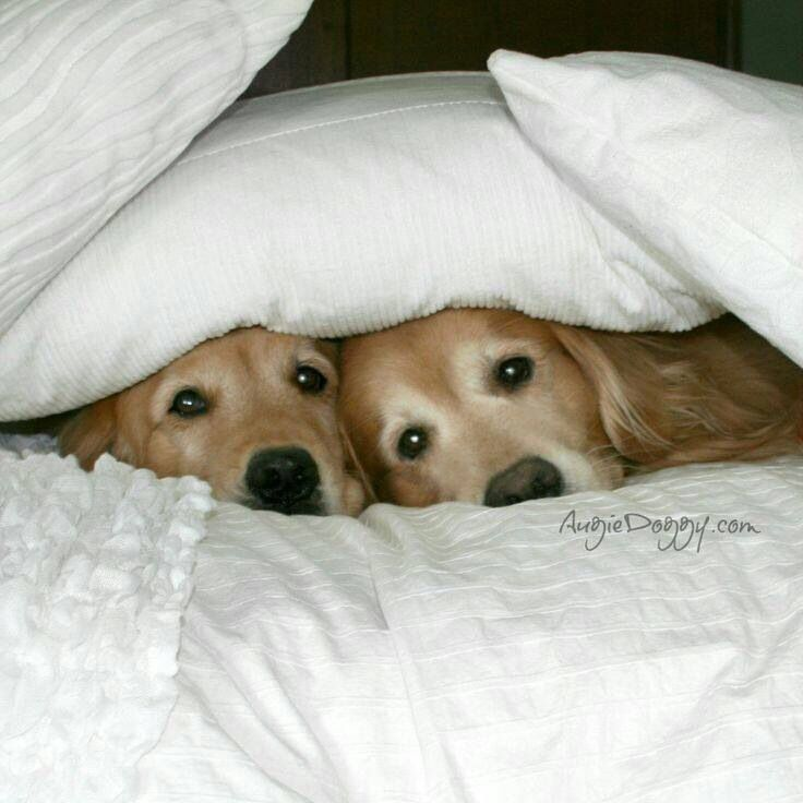 We heard a noise.......