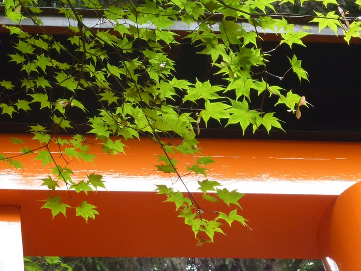Green on red in Kyoto
