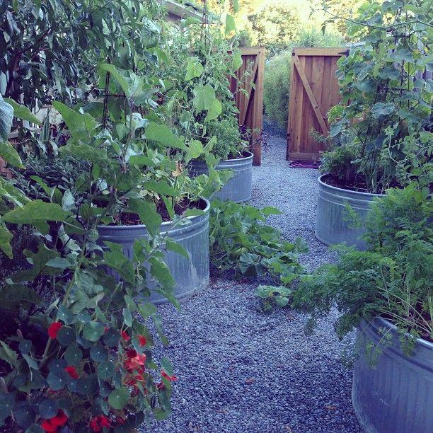 Container Garden using galvanized metal water troughs.