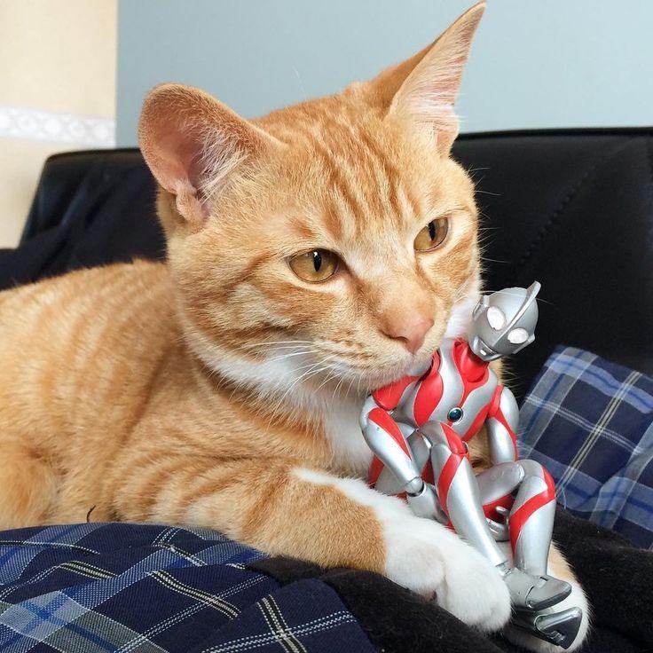 保護された子猫ちゃん。ウルトラマンに温かく見守られて…                                                                                                                                                                                 もっと見る