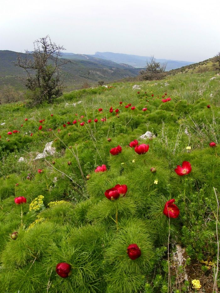 Поход через Тарпанбаирский хребет., фото Склон Тарпан-баира. :: Фото.Крым