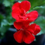 3 engrais naturels pour les plantes pratiques et gratuits.