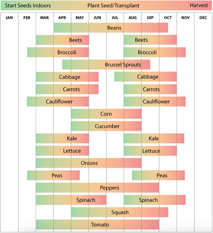 Zone 7 planting schedule from - Florida vegetable gardening guide ...