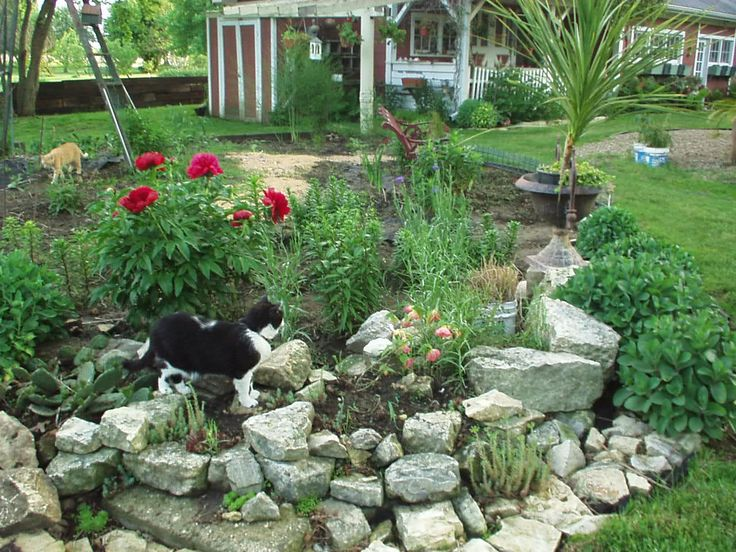 Small rock garden ideas need ideas for rocks birds blooms for Stone landscaping ideas
