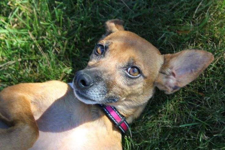 Isabel - For the Love of Paws Animal Rescue
