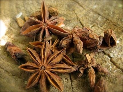 スターアニス(八角、トウシキミ) シキミ科  Illicium verum (Star anise)