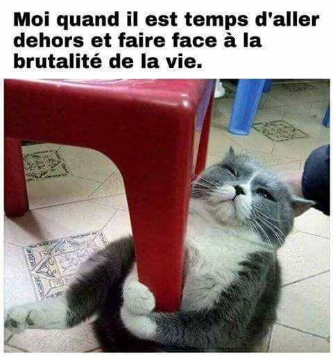 Guys I found a french cat meme