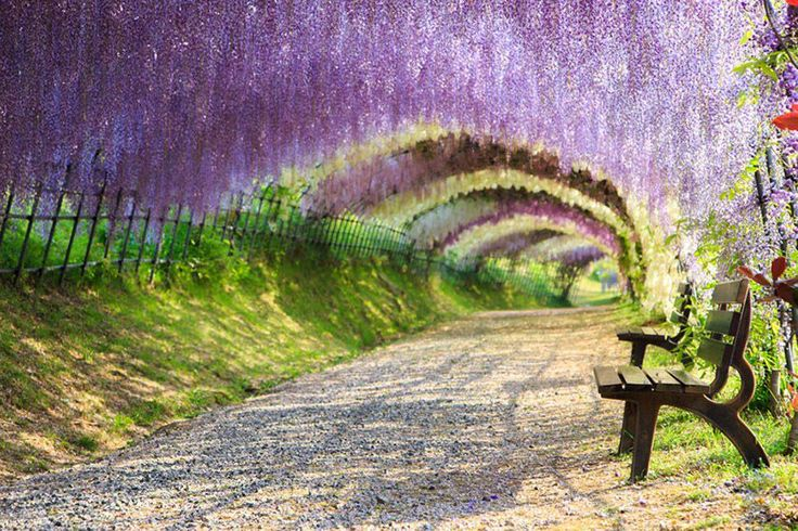 15 of the world s most beautiful tree tunnels and how to for Most beautiful garden trees