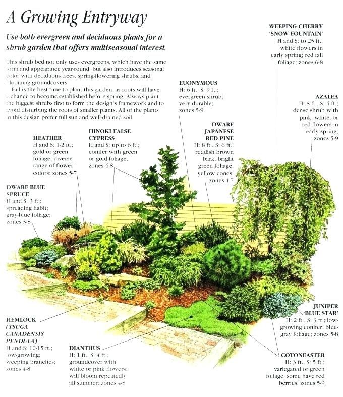 Image Result For Evergreen Bushes Zone 8 Conifers Garden Front Yard Landscaping Evergreen Landscape