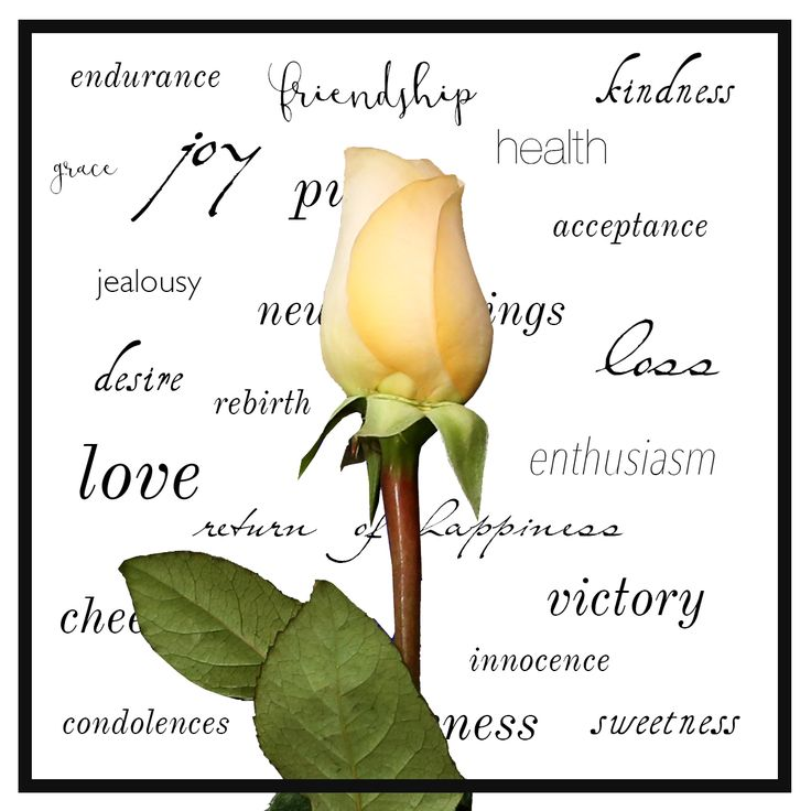 Flowers vs words - how to choose a bouquet with meaning - Le Bouquet