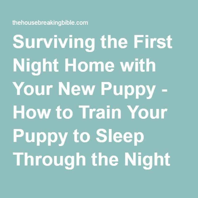 Surviving the First Night Home with Your New Puppy - How to Train Your Puppy to Sleep Through the Night