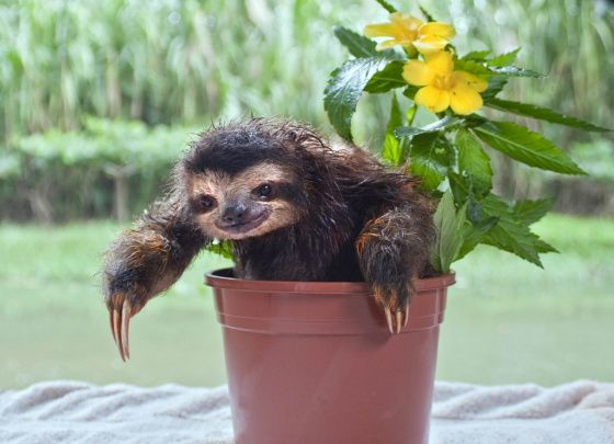 Maybe I'd a have a greener thumb if I were growing sloths.