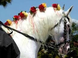 Image result for ribbons in horses manes