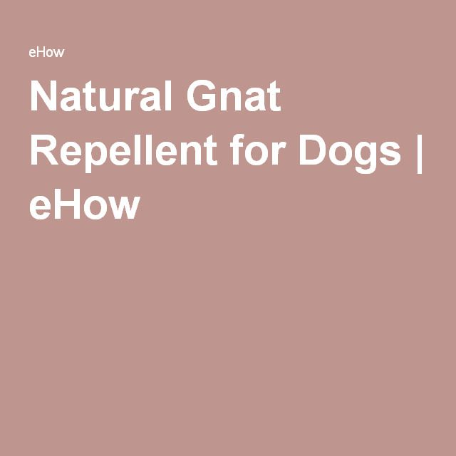 Natural Gnat Repellent for Dogs | eHow