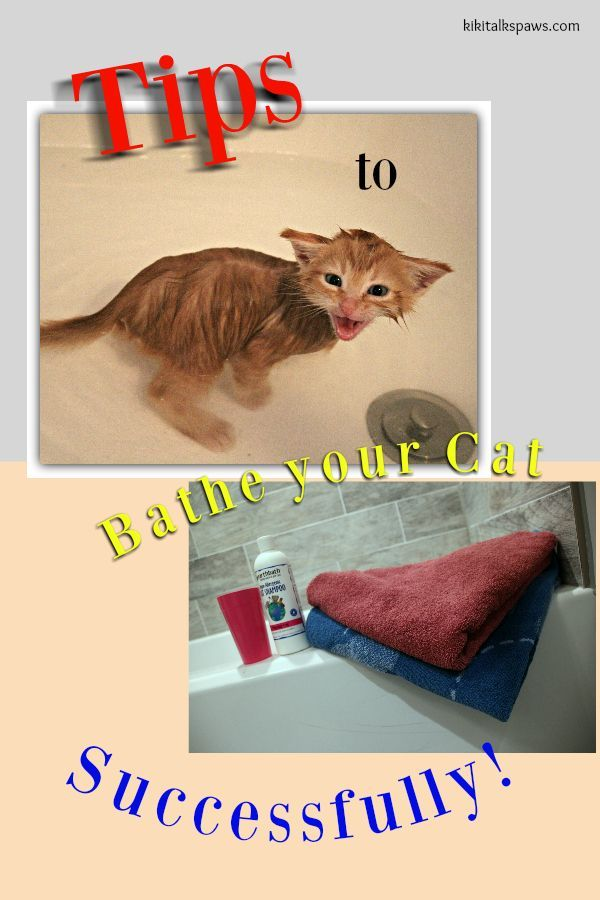 Tips To Bathe Your Cat Successfully Cats Cucumbers Cat Having Kittens Cat Bath