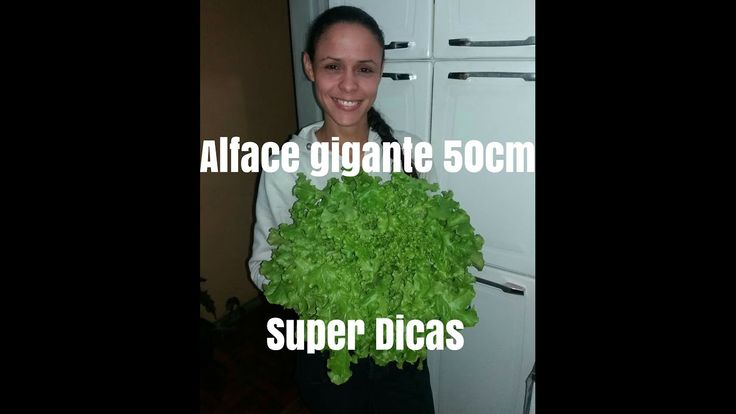 Super Dicas para Plantar Alface. venha aprender...