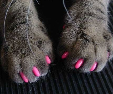 78 Best Cats In Pink Images On Pinterest Kitty Art