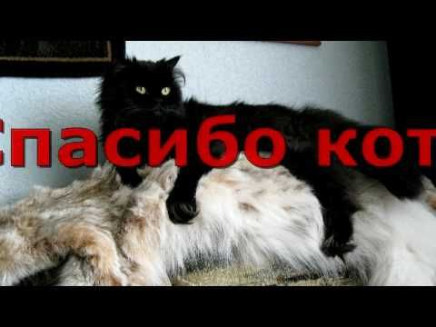"""Ответ Мага Николаева Камеди Клаб на выпуск 526 сезон 12. """"Спасибо коту Г..."""