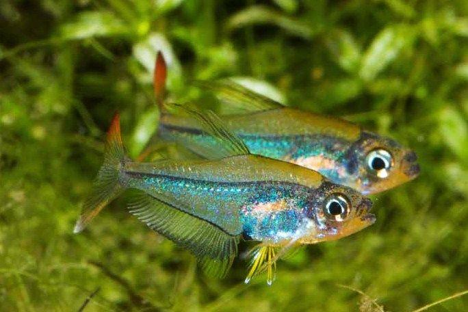 142 best aquarium final cut images on pinterest for Fische arten
