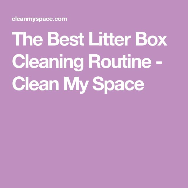 The Best Litter Box Cleaning Routine – Clean My Space