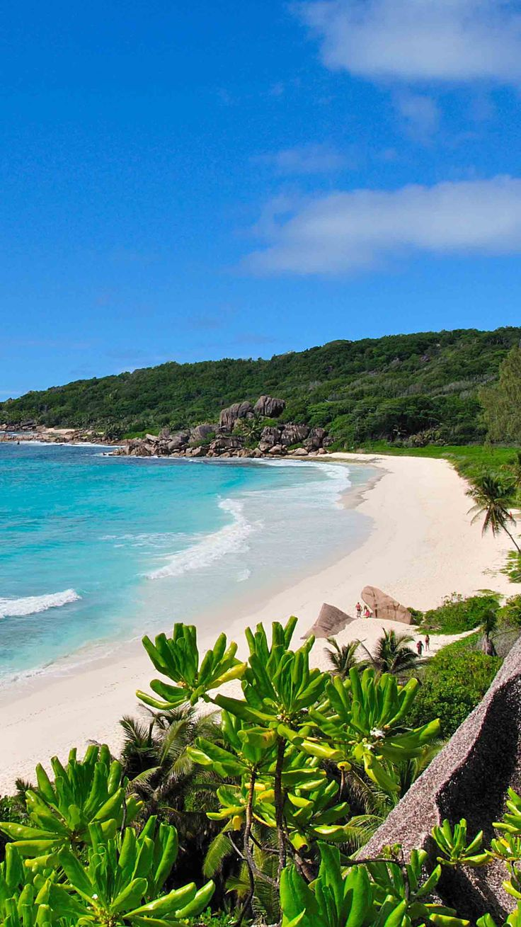 Plage sauvage ! #Seychelles http://tracking.publicidees.com/clic.php?promoid=11188&progid=515&partid=48172