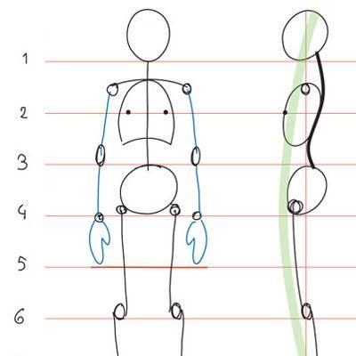 Human Anatomy Fundamentals: Basic Body Proportions