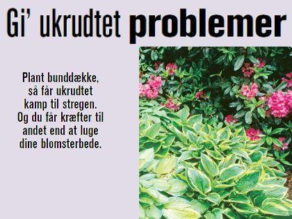 Plant bunddække, så får ukrudtet kamp til stregen. Og du får kræfter til andet end at luge dine blomsterbede.