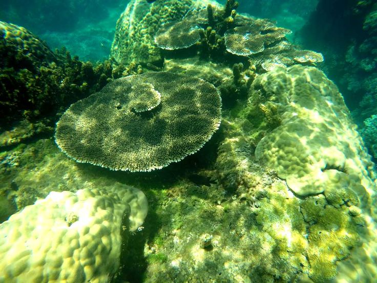 Corals in Cham Island, Hoi An, Vietnam | Laugh Travel Eat