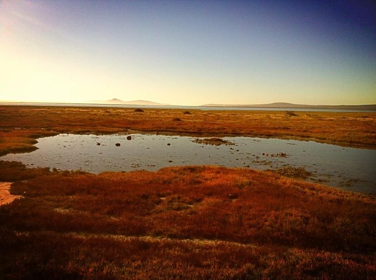 @Elise West coast national park, south africa