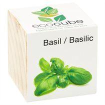 Écocube−Basilic