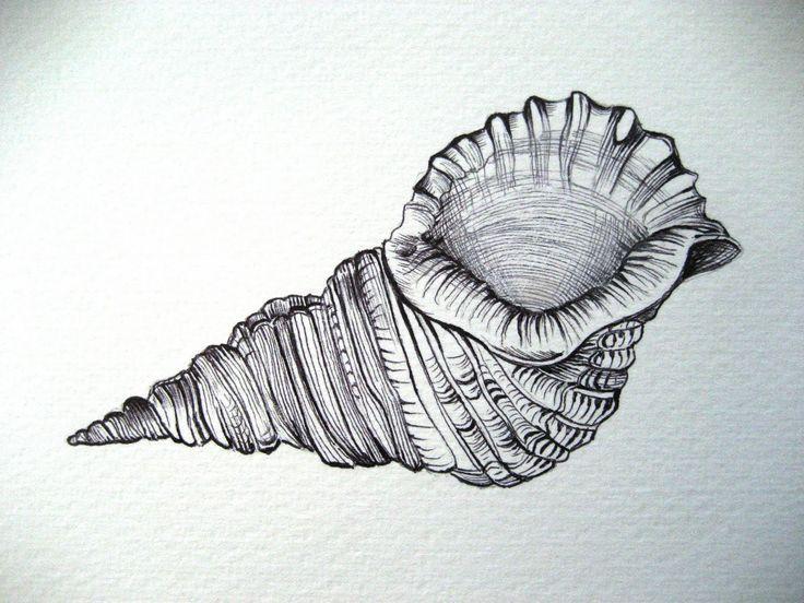 seashell drawings - Google Search