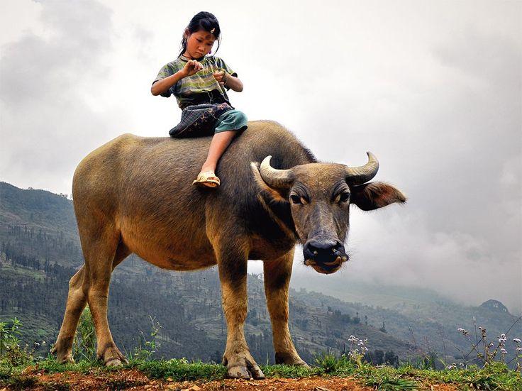 Child and Water Buffalo, Vietnam Enfant sur un buffle