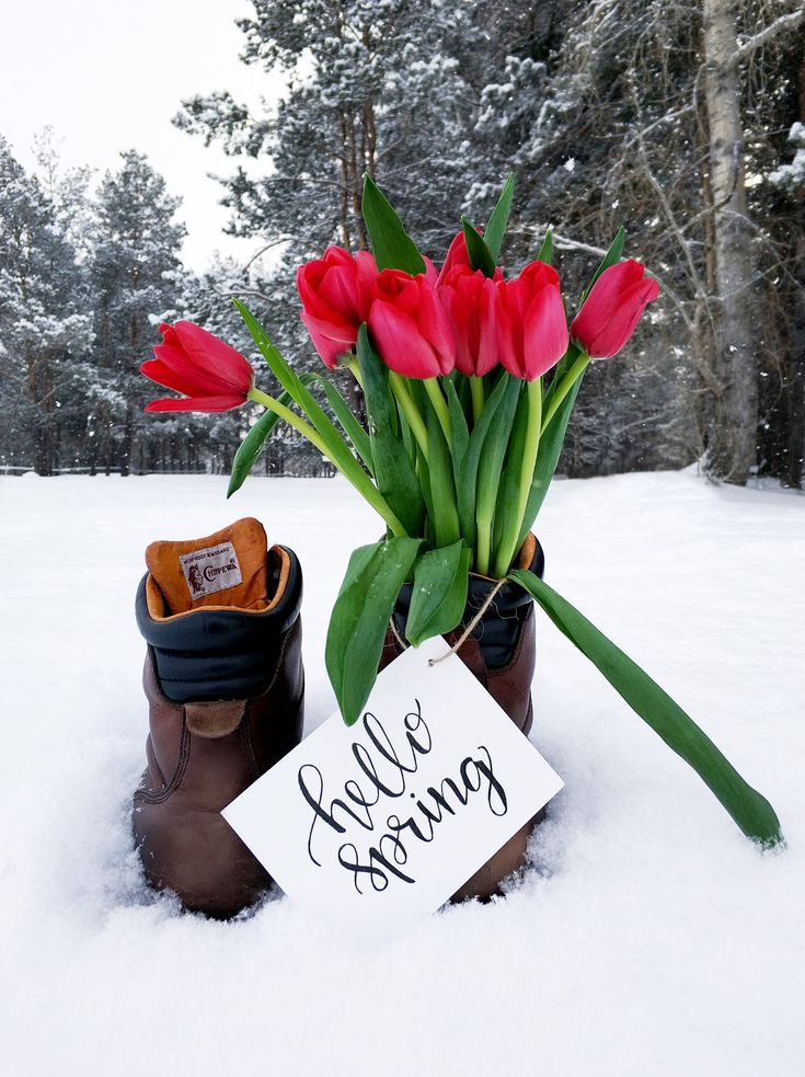 Red Flower Bouquet on Brown Leather Boots during Snow Weather  Free Stock Photo