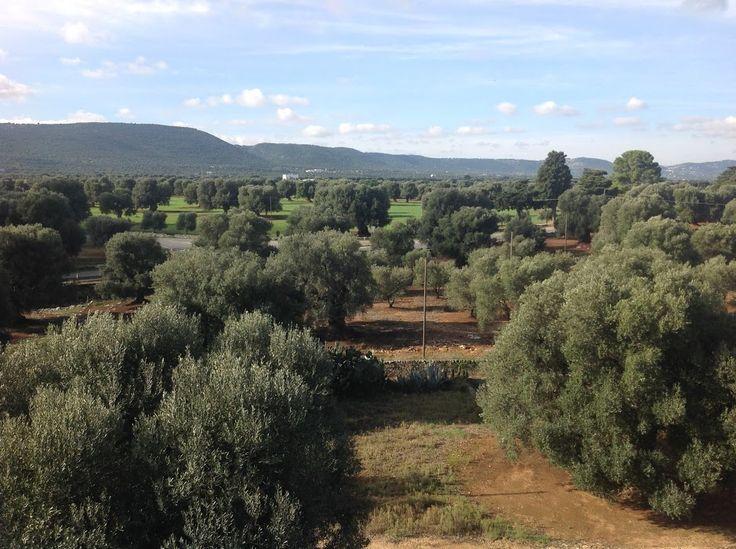 Das ist Apulien vom Haus einer guten Freundin aus gesehen, heute... Wie schön, dass ich nächstes Wochenende dort sein werde!