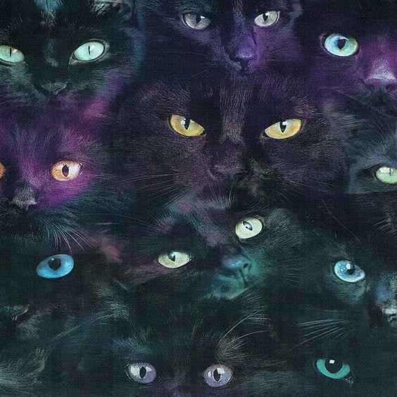 Svarta katter