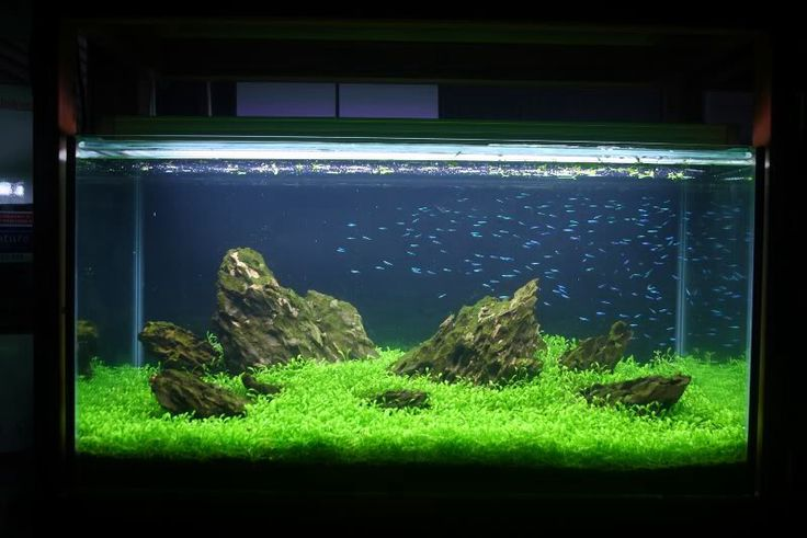 Best 25 tetra fish ideas on pinterest freshwater fish for Tetra fish tanks
