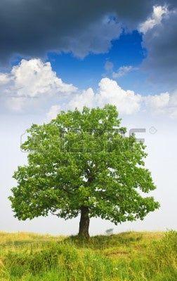 Zomer landschap met eiken boom onder bewolkte hemel Stockfoto