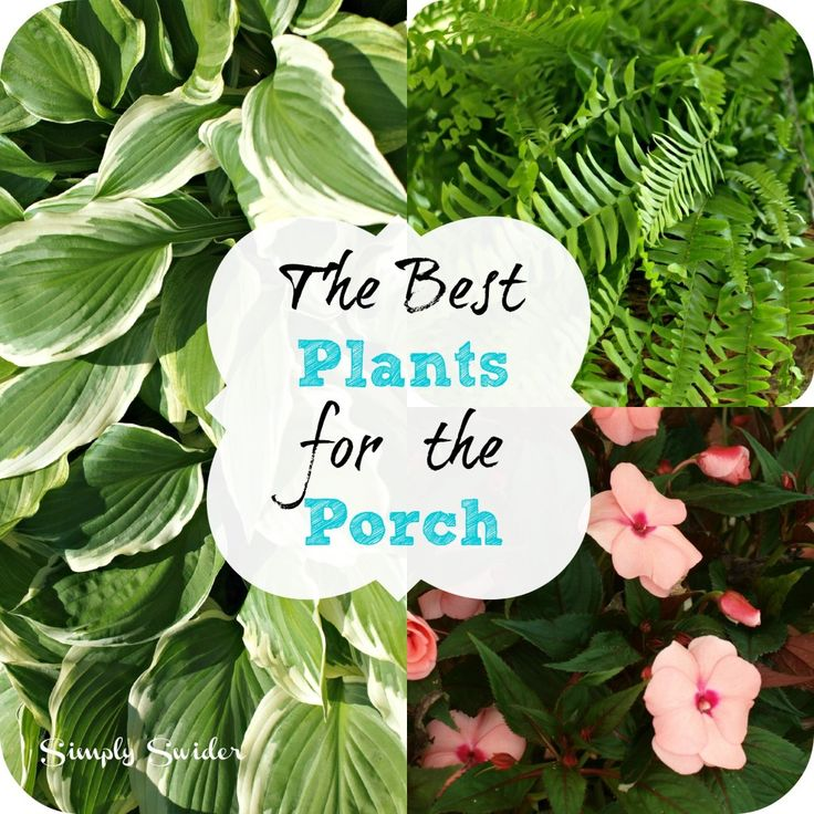 Best plants for the porch - hostas, boston fern, and impatience