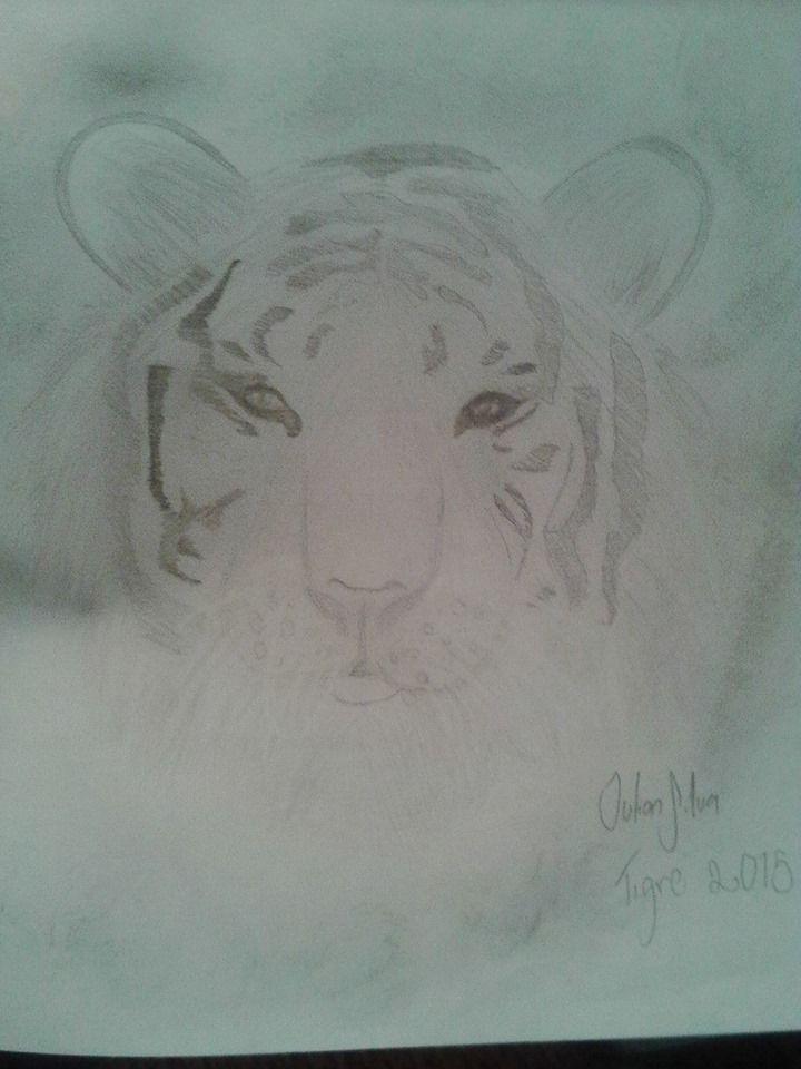 Primer  tigre