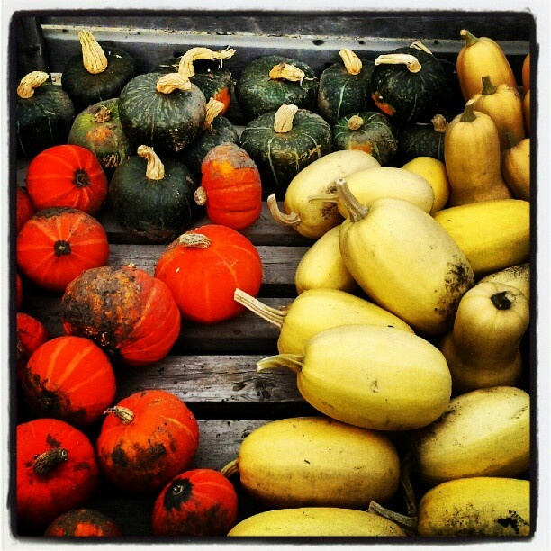 anyone for squash?