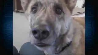 dog talking about bacon in refrigerator original - YouTube