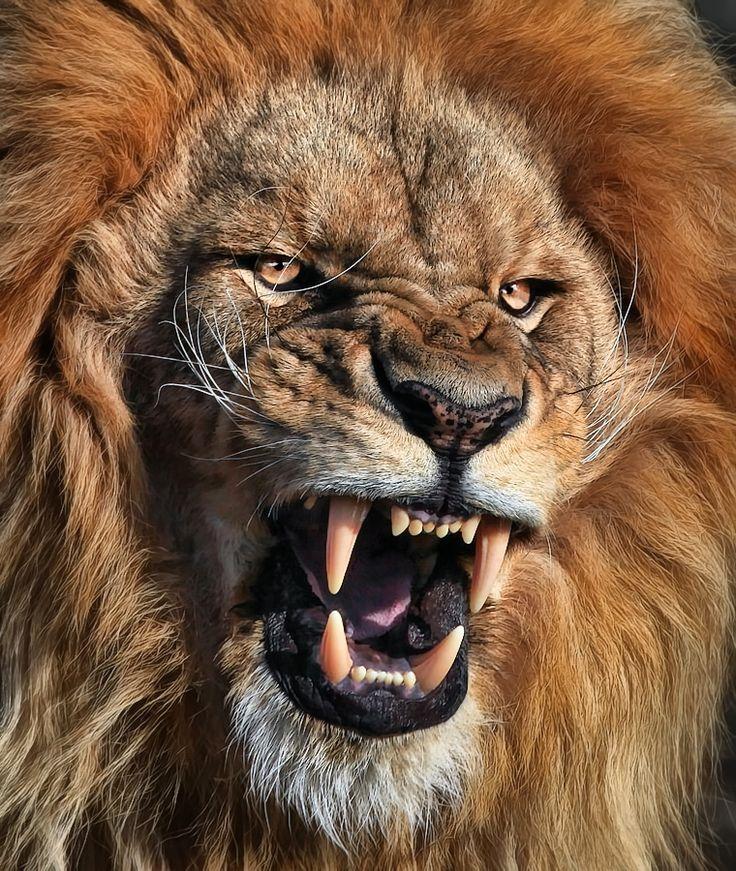 León, Rey de la Selva - Photograph I said, no photos! by Klaus Wiese on 500px Lion in Africa