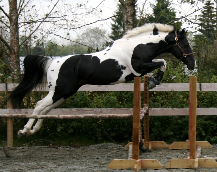 138 Best Horses Free Jumping Images On Pinterest