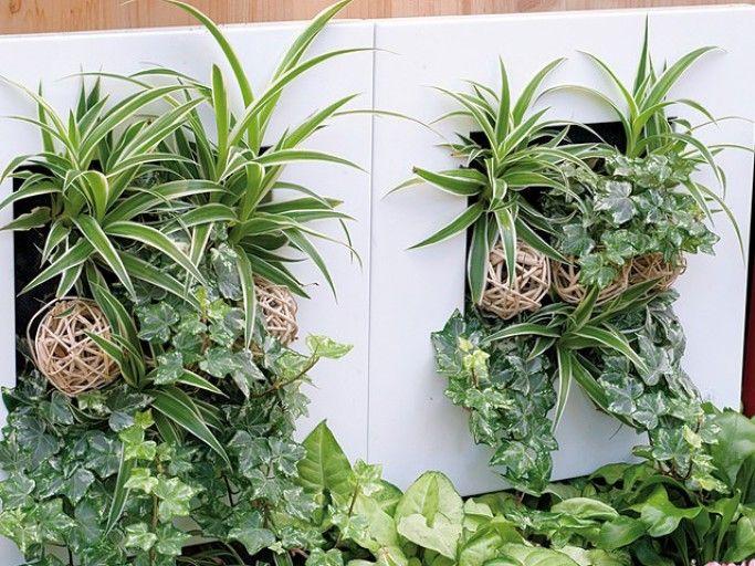 Entretien des cadres végétaux - F. Marre - Rustica - Jardinerie Botanic
